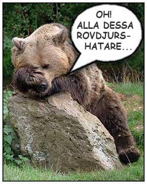 Björn, Rovdjursfrågan