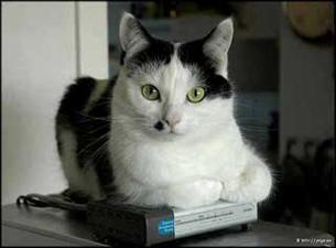 Felin, Katt