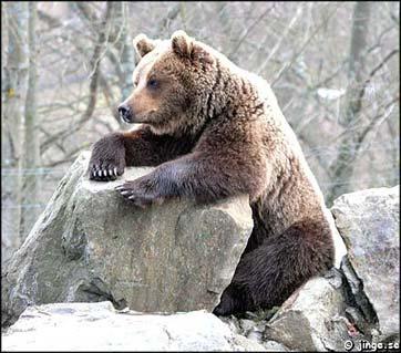 varg, björn